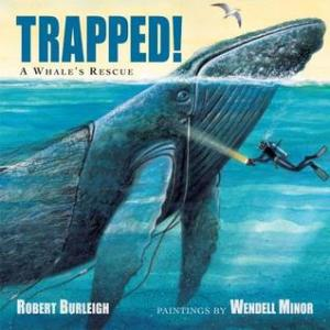 trapped a whale's rescue